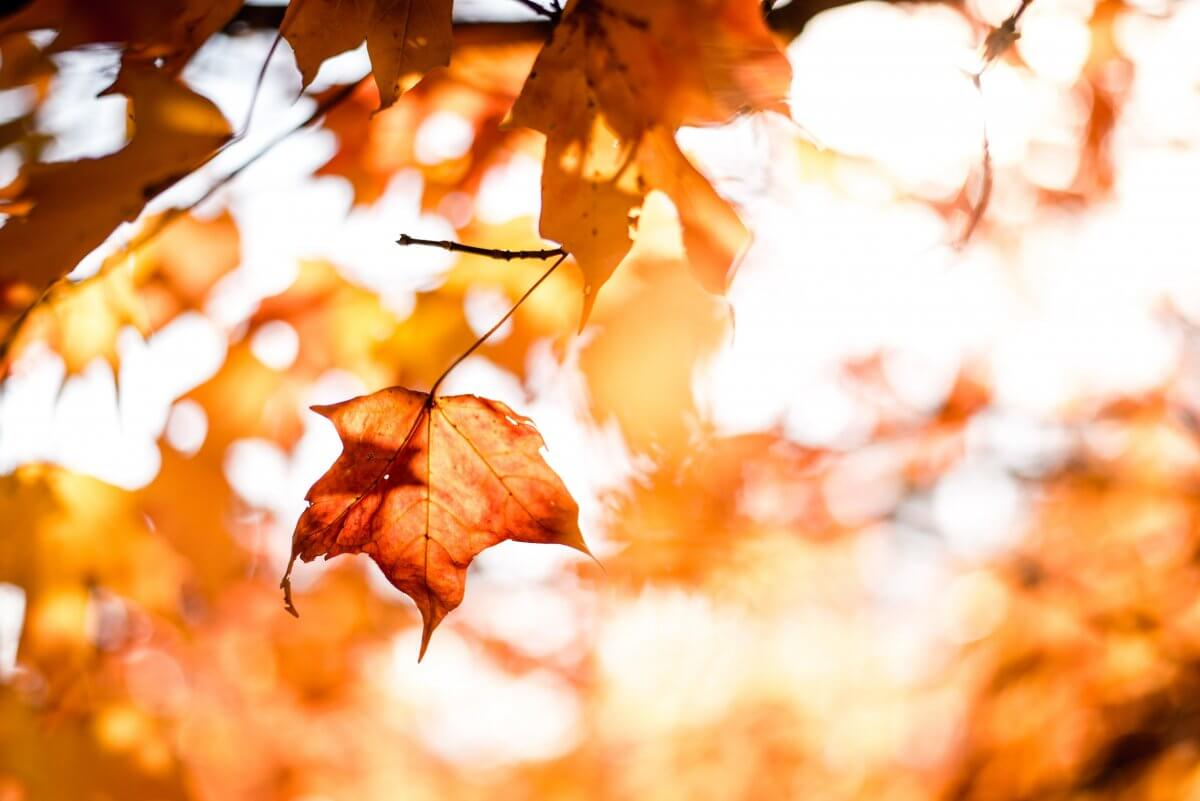 秋の味覚!ヘアケアレシピをご紹介