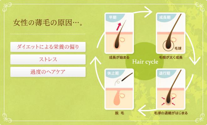女性の薄毛の原因…。